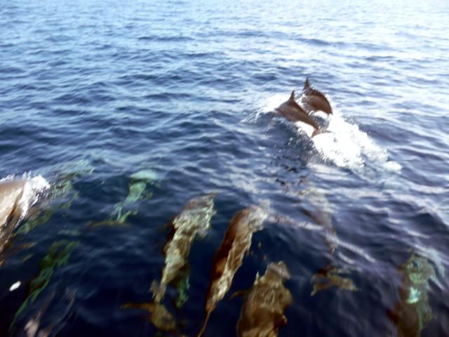 los delfinos