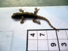 gekko jeesas parin numeron kans